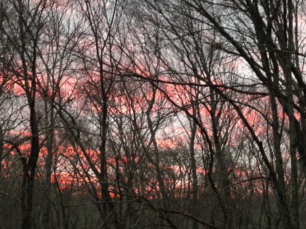 sunset behind bare trees